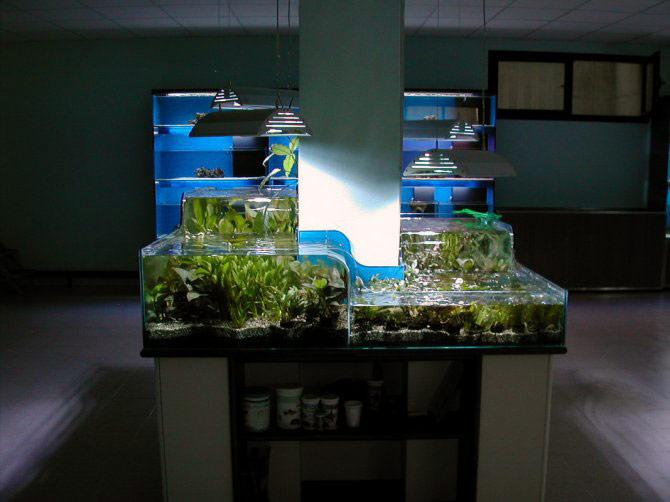 Alcune delle nostre realizzazioni per i negozi - Costruire mobile acquario ...