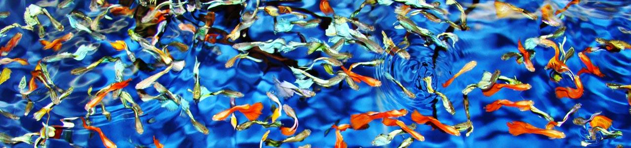 allevamento pesci tropicali realizzazione vasche e acquari