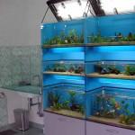 Fantail per il negozio Aqua Studio di Roma