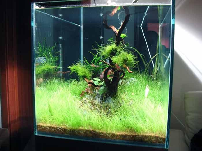 Acquari fantail fantail - Costruire mobile acquario ...