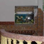 Fantail per il Negozio Green Turtle