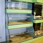 Strutture acquari Fantail per il negozio Marchetti
