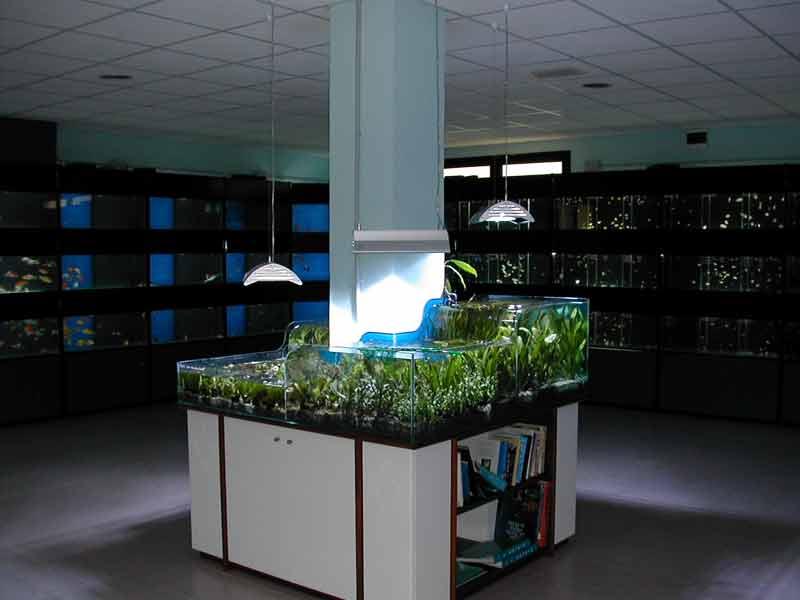 Negozio ocean antille fantail for Acquari artigianali prezzi